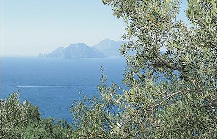 Foto_Capri